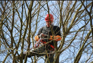 Faire élaguer ses arbres à Marck (62730)