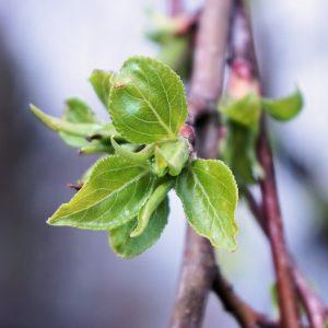 leaf-1308139_1920
