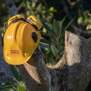 tree-3488419_1920