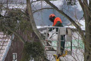 Faire élaguer ses arbres à Sains-en-Gohelle (62114)