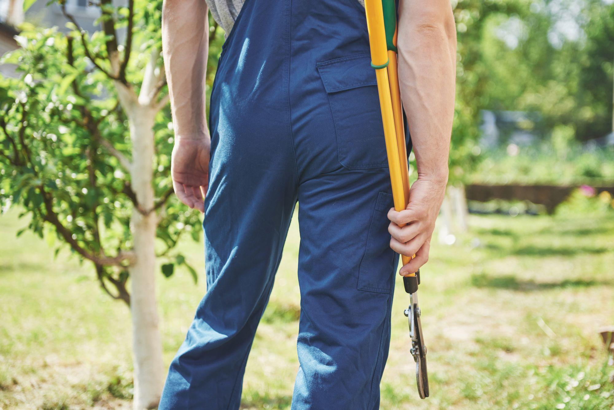a-professional-gardener-at-work-cuts-fruit-trees-GA2TUFQ