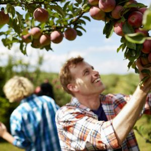 rows-of-fruit-trees-in-an-organic-orchard-a-group--5CF3C65