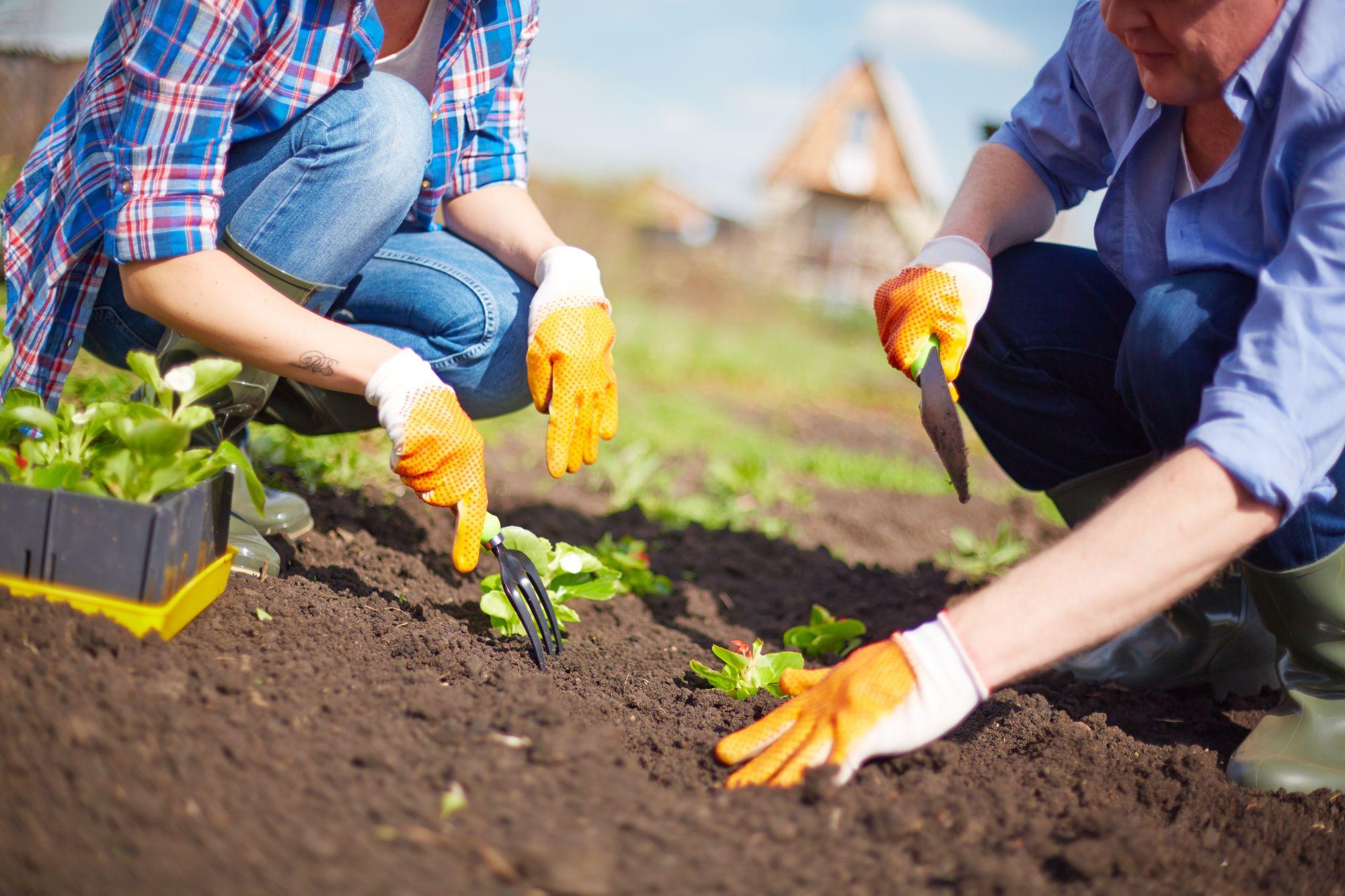 working-in-the-garden-PNBYEAX (1)